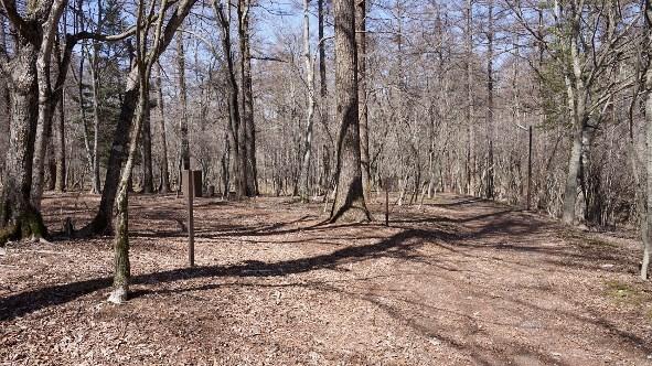 【高原の静かな森】『村営山中湖キャンプ場』攻略ガイド(駐車場・トイレ)